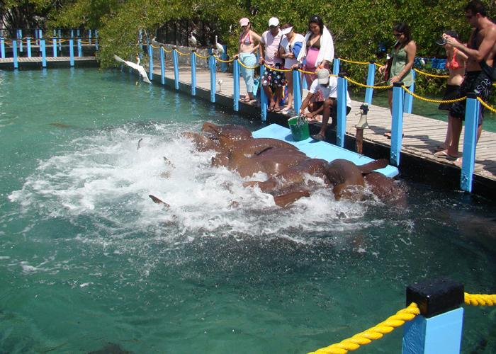 Acuario en las Islas del Rosario
