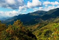 Plan Bogot�, Paisaje Cafetero y Cartagena