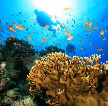 buceo con peces tropicales