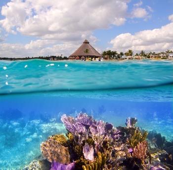 arrecife de coral en la riviera maya cancun