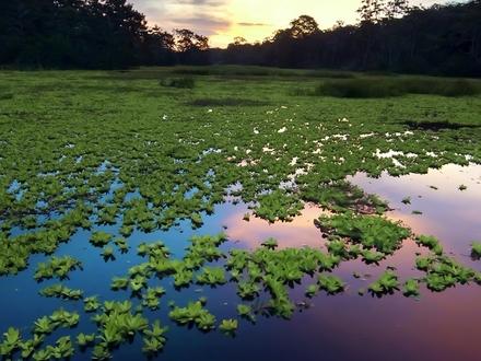 Viajes al Amazonas Colombiano
